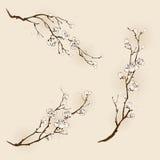 Fiore della prugna con la linea progettazione Immagini Stock Libere da Diritti