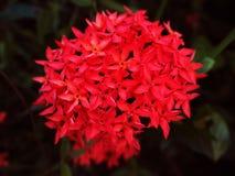 Fiore della punta Fotografie Stock