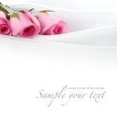 Fiore della Rosa su seta Fotografia Stock Libera da Diritti