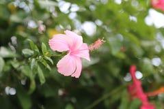 Fiore della scarpa con il fondo vago delle foglie verdi fotografia stock