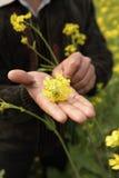 Fiore della senape Fotografie Stock Libere da Diritti
