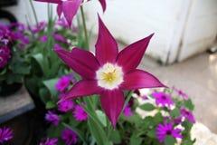 Fiore della serra Immagini Stock