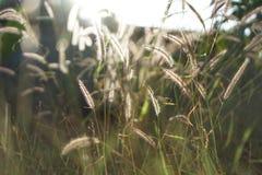 Fiore della sfuocatura con il fondo della luce del sole Fotografia Stock Libera da Diritti