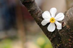 Fiore della sorgente Immagini Stock Libere da Diritti