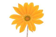 Fiore della sorgente Immagine Stock Libera da Diritti