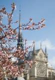 Fiore della sorgente a Parigi Immagine Stock Libera da Diritti
