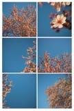 Fiore della sorgente su un collage dell'albero fotografia stock