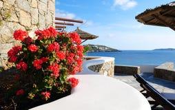 Fiore della spiaggia Fotografia Stock
