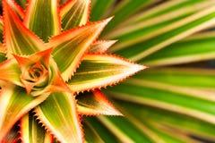 Fiore della stella su sinistra Immagine Stock