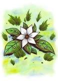 Fiore della stella (Zen Pictures, 2011) Fotografia Stock Libera da Diritti