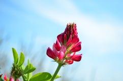 Fiore della sulla Immagini Stock