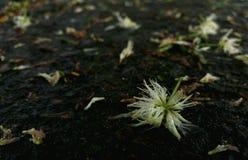 Fiore della via Fotografie Stock