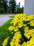 Fiore della via immagine stock