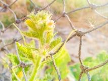 Fiore della zucca al sole Immagini Stock