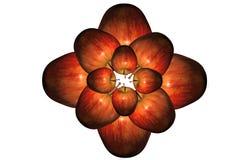 Fiore delle mele Immagine Stock