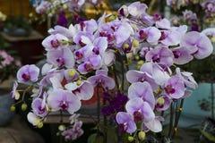 Fiore delle orchidee Fotografie Stock Libere da Diritti