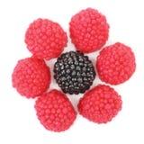 Fiore delle palle colorate giuggiola Fotografie Stock