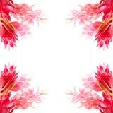 Fiore dello zenzero Immagini Stock