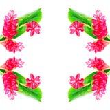 Fiore dello zenzero rosso Fotografie Stock Libere da Diritti