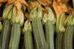 Fiore dello zucchini Fotografia Stock