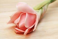 Fiore dentellare dello zenzero della torcia fotografie stock libere da diritti