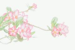 Fiore dentellare su priorità bassa bianca Fotografia Stock Libera da Diritti