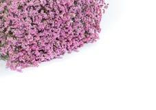 Fiore dentellare su priorità bassa bianca Fotografie Stock Libere da Diritti