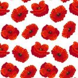Fiore dettagliato realistico Poppy Background Pattern Vettore Fotografia Stock Libera da Diritti