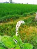 Fiore di agricoltura immagini stock