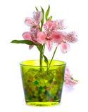 Fiore di Alstroemeria/ Fotografie Stock Libere da Diritti