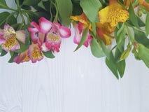 Fiore di Alstroemeria su un fondo di legno bianco Fotografia Stock Libera da Diritti