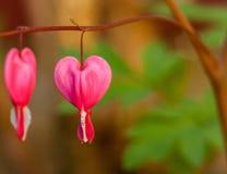 Fiore di amore Fotografie Stock Libere da Diritti