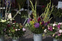 Fiore di Amsterdam Fotografia Stock Libera da Diritti