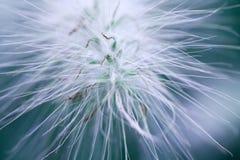 Fiore di astrazione Fotografia Stock