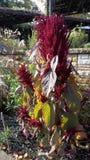Fiore di autunno Immagine Stock Libera da Diritti