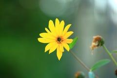 Fiore di autunno fotografia stock