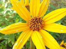 Fiore di autunno Fotografie Stock Libere da Diritti