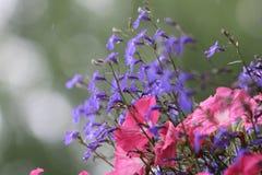 Fiore di Beautilful Immagine Stock