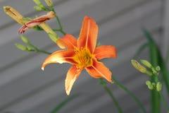 Fiore di Beautilful Fotografie Stock