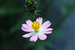 Fiore di bellezza fotografie stock