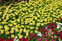 Fiore di bellezza immagini stock