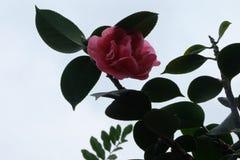 Fiore di bellezza Immagini Stock Libere da Diritti