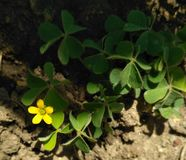 fiore 143 di bellezza del kWhite Fotografia Stock