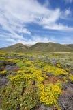 fiore di Big Sur Fotografia Stock Libera da Diritti