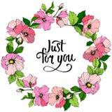 Fiore di canina di rosa di rosa di vettore Arte incisa dell'inchiostro Quadrato dell'ornamento del confine della pagina Appena pe illustrazione di stock