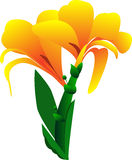 Fiore di Canna su fondo bianco Immagine Stock Libera da Diritti