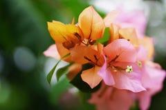 Fiore di carta del fiore Fotografia Stock
