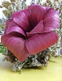 Fiore di carta di colore di ciclamino Fotografia Stock Libera da Diritti