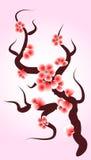Fiore di ciliegia. Fotografia Stock