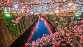 Fiore di ciliegia al canale di Meguro a Tokyo, Giappone immagini stock libere da diritti